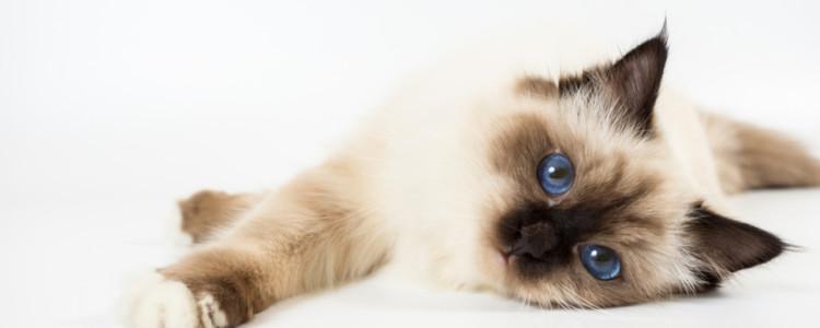 Возраст кошки по человеческим меркам: таблицы соответствия лет