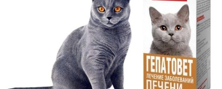 Гепатовет для кошек: инструкция по применению, отзывы, аналоги