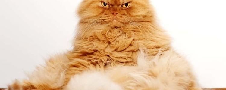 Топ самых знаменитых в мире кошек и котов