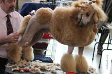 Груминг собак что это такое - подробное описание, частые вопросы, инструменты