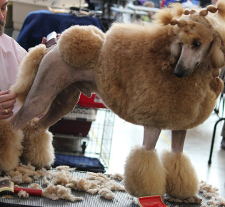 Груминг собак что это такое — подробное описание, частые вопросы, инструменты