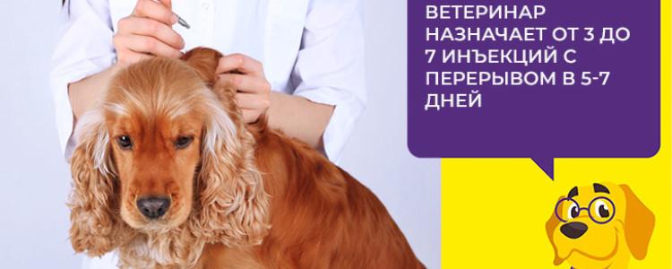 Бонхарен для собак: инструкция и показания к применению, отзывы, цена