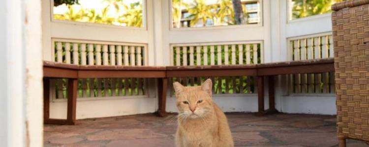 В каких странах едят кошек и почему это происходит?