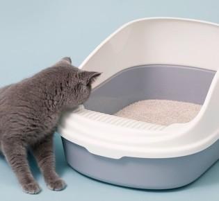Если кошка описала или пометила диван, вывести запах с дивана ещё можно — лайфхаки, как убрать, избавиться от запаха мочи кошки