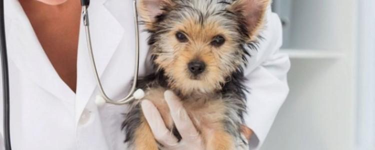 Гипоаллергенные корма для собак — обзор лучших производителей