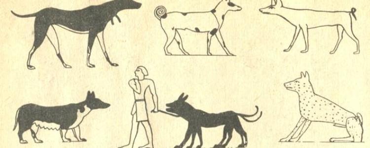 Гончие породы собак: краткое описание и фото пород