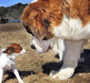 До какого возраста растут собаки: этапы физиологического развития