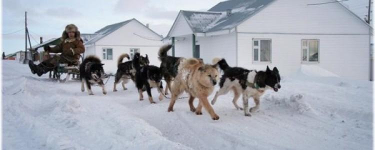 Ездовые собаки: самые популярные породы с названиями и фотографиями