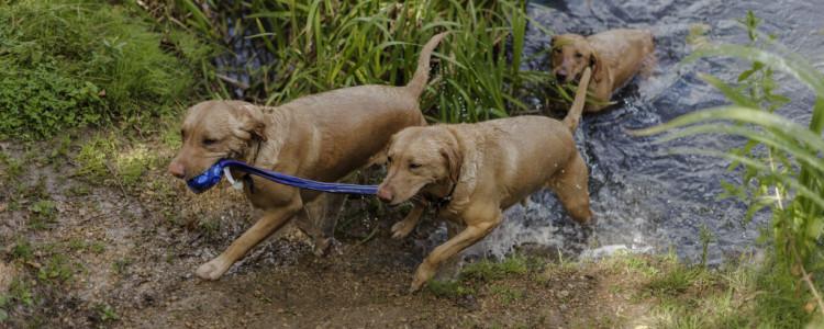 Глистогонные препараты для собак: обзор 17 противоглистных лекарств