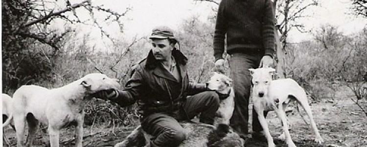 Аргентинский дог — фото, описание, характер, факты, плюсы, минусы собаки