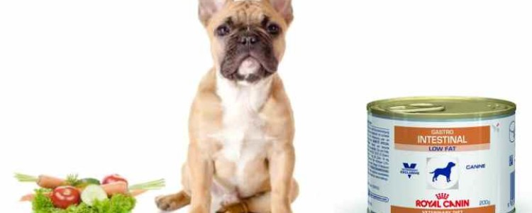 Royal Canin Gastro Intestinal при нарушении пищеварения
