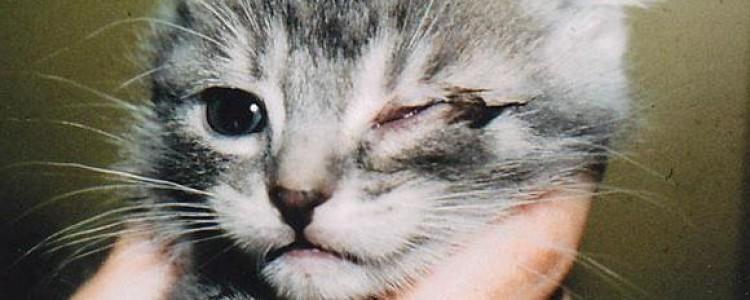 Бриллиантовые глаза — капли для собак: инструкция, отзывы, цена