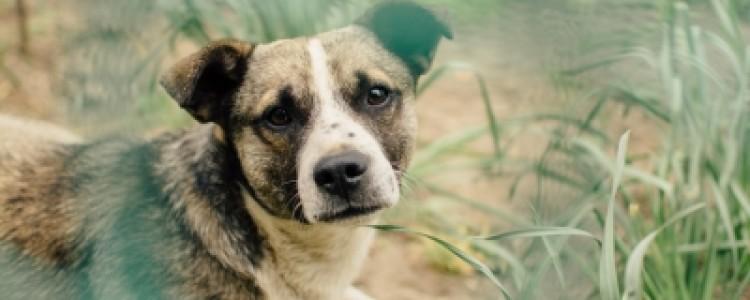 Болезнь Пертеса у собак: фото, симптомы, лечение