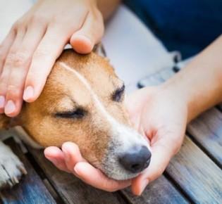 Дирофиляриоз у собак — распознать симптомы и вылечить