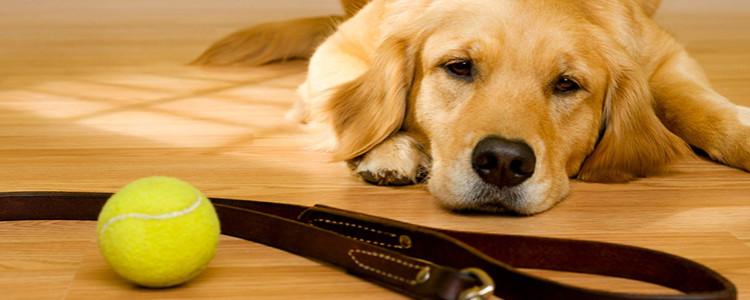 Аллергия у собак: проявления, симптомы и лечение
