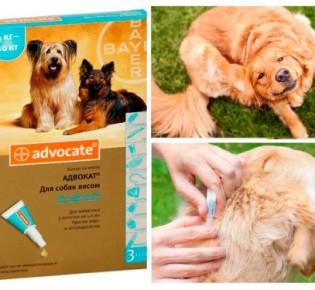Капли Адвокат для собак: инструкция и отзывы ветеринаров