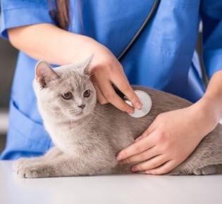 Что творится в голове у кошки?