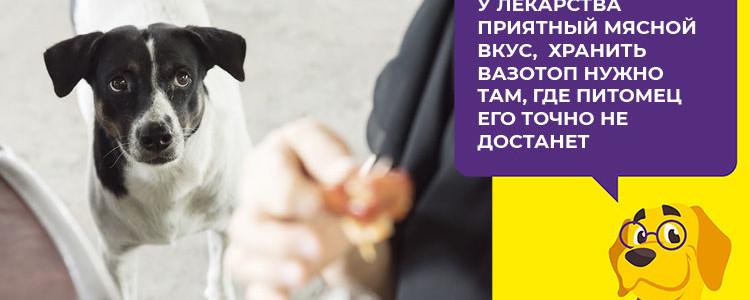 Вазотоп для собак: инструкция, аналоги, цена, отзывы