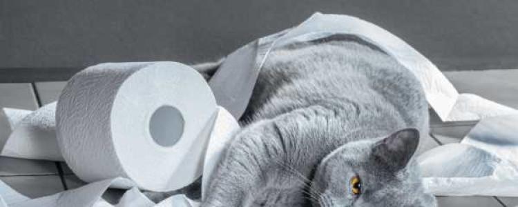 Гастроэнтерит у кошек: лечение, симптомы, как определяется, какой прогноз, восстановление