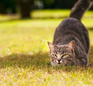 Кот ест много и постоянно просит добавки даже после еды: почему животное не наедается?