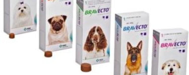 Бравекто для собак: инструкция по применению, отзывы, аналоги