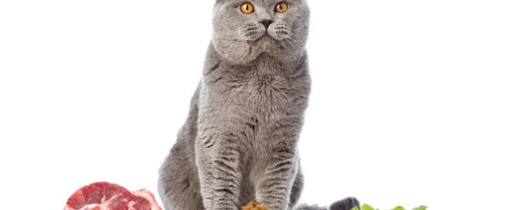 Корм для кошек Innova Cat and Kitten: обзор, отзывы