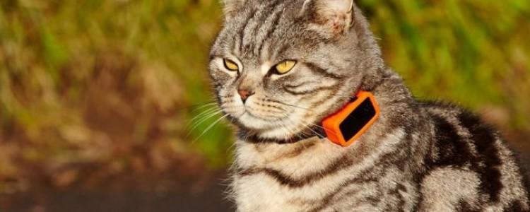 Маячок для кошки: чтобы никто не потерялся