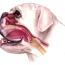 Брахицефальные собачьи породы — полный список