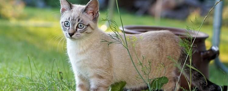 До какого возраста растут коты и кошки?