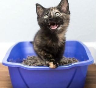 Запор у кота: что делать в домашних условиях, как быстро помочь, профилактика