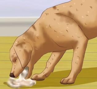 Запор у собаки: что делать, какое слабительное дать, клизма для собаки