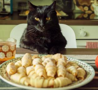 Дюфалак для кошек инструкция по применению: дозировка, сколько раз давать при запоре?