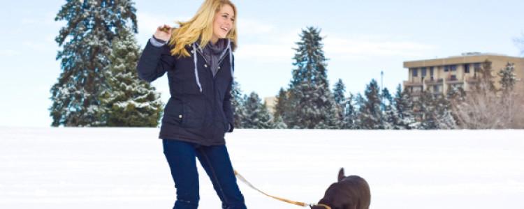 Простуда у собак: причины, симптомы и лечение
