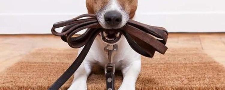 Воспитание собаки — основные принципы и правила
