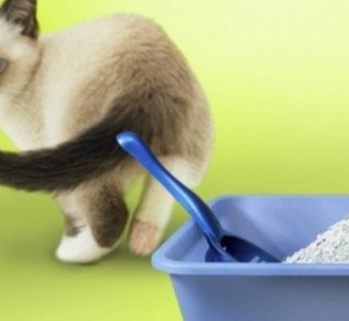 Антигадин для кошек, состав и сравнение спреев: какой лучше помогает, как сделать своими руками?