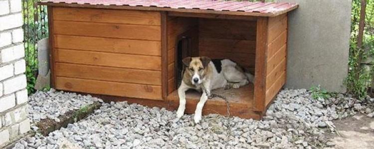 Будка для собаки своими руками, дизайн красивого большого собачьего домика с верандой, конура в квартире