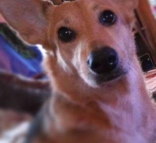 Дворняжка: описание породы, характер собаки и щенка, фото, плюсы и минусы