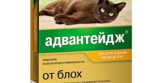 Адвантейдж для кошек: инструкция и показания к применению, отзывы
