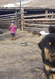 Бурят-монгольский волкодав (хотошо): цена, описание породы, характер, фото