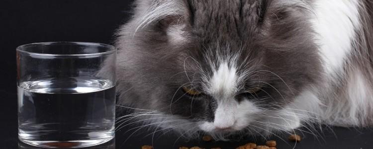 Авитаминоз у кошек: как проявляется, лечение и профилактика