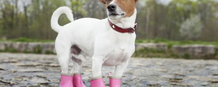 Обувь для собак своими руками: сапожки, ботинки и вязаная