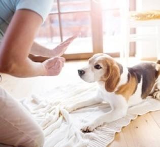 Основы самостоятельной дрессировки собак и щенков разных пород