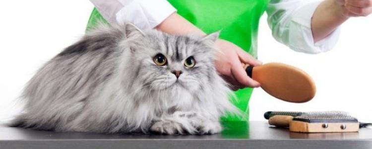Вычесывание кошки: особенности проведения процедуры