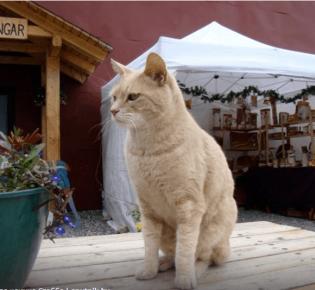 Праздник «День кошек»: всё о праздновании и истории дня котов