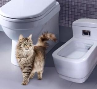 Обзор автоматических (самоочищающихся) туалетов для кошек и котят