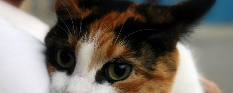 Герпес у кошек: симптомы и лечение