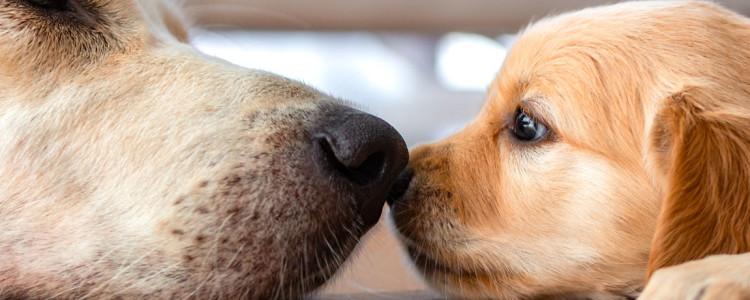 Возраст собак по человеческим меркам: таблица соотношения возраста собаки и человека