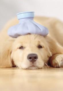 Как ведет себя щенок в жару?
