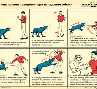 Защита от собаки в случае нападения: электрошокер и другие средства