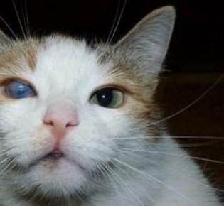 У кота на глазах белая пленка: причины заболевания и способы лечения